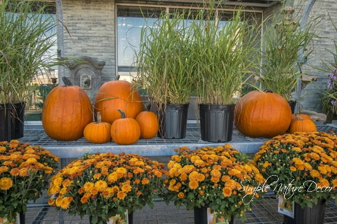 pumpkins and mums decor