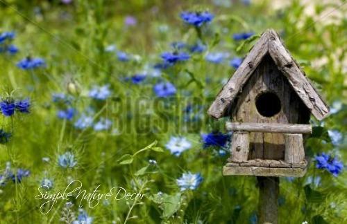 flowers and bird house ideas