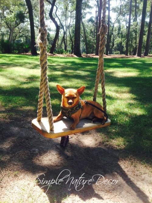 luigi on a swing