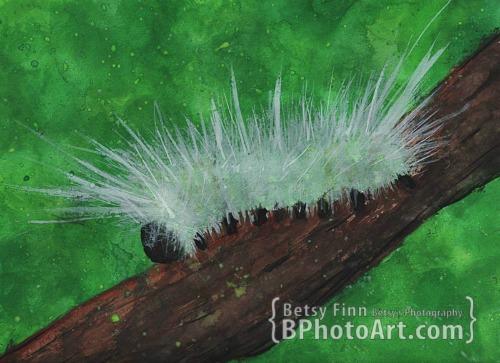 bphotoart-dexter-plein-air-caterpillar