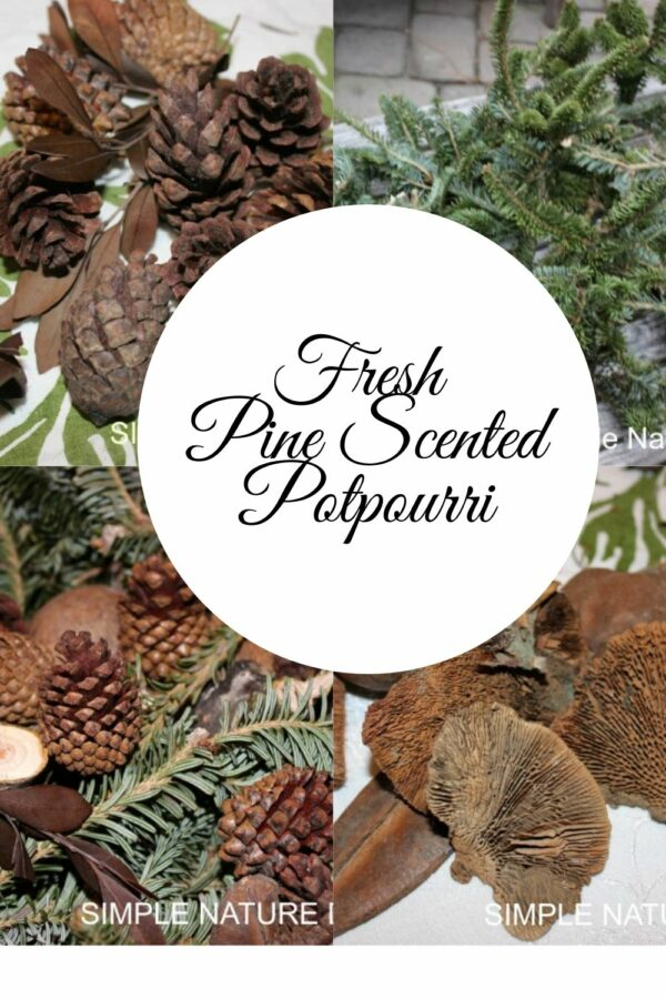 How To Make Fresh Scented Balsam Pine Potpourri