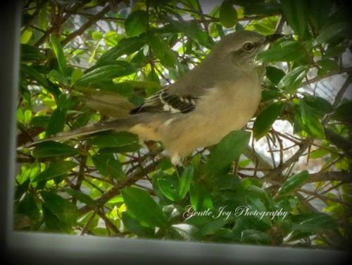 fab friday bird