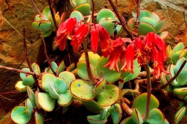 Desert Botanical Garden:7 Botanical Garden Tours You Will Love