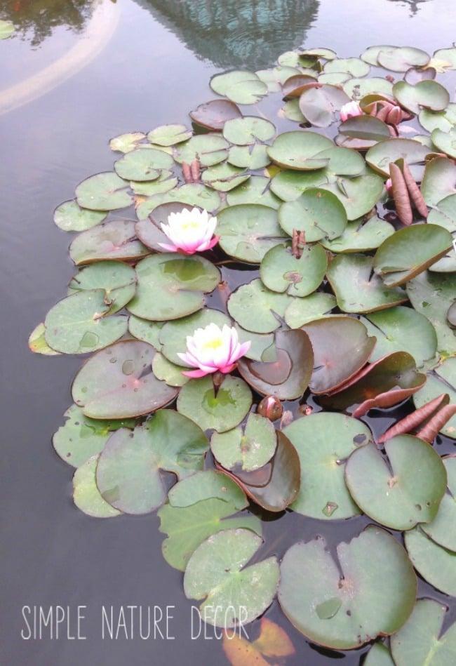 7 Botanical Garden Tours You Will Love