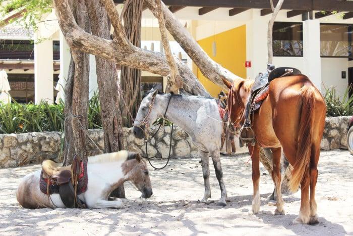 costa rica horse back riding