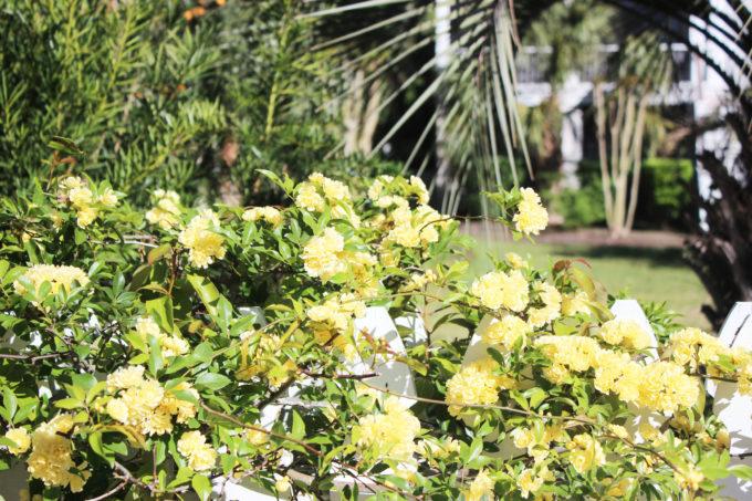 sullivan island 6
