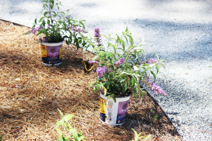 curb appeal butterfly plants