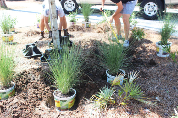 curb appeal planting the grasses