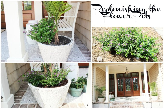 curb appeal adding plants to pots
