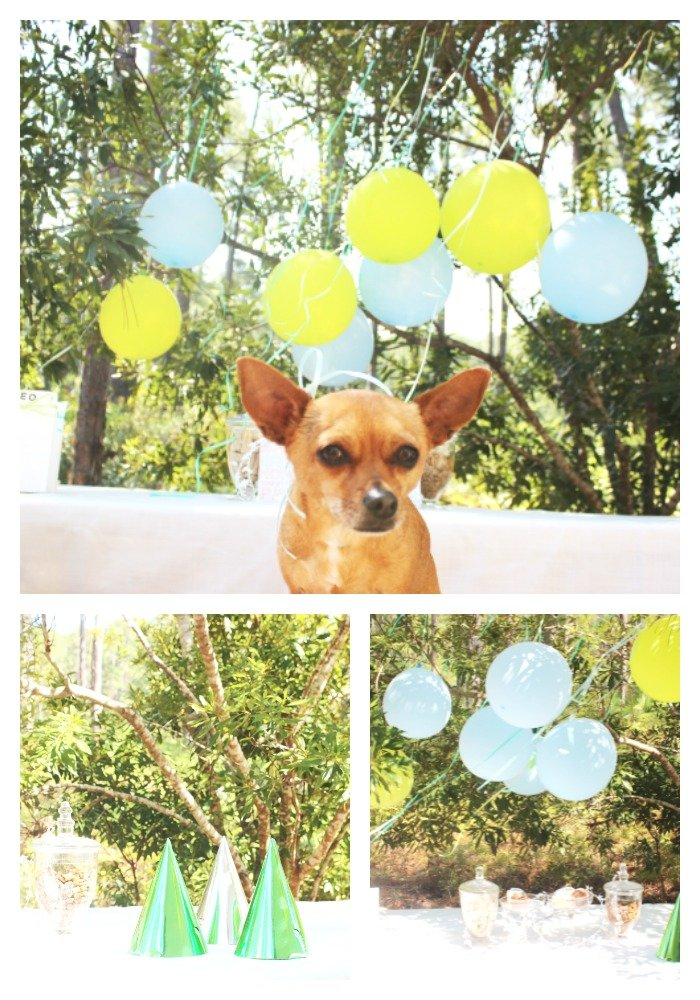 5 Cute Ideas To Celebrate Your Pets Birthday Party