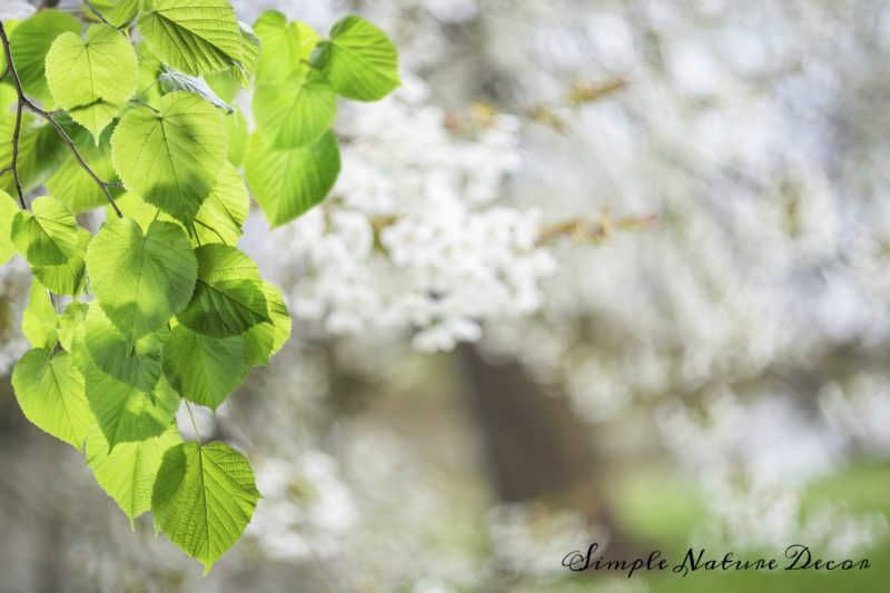 Nature background with green leaves and blooming trees