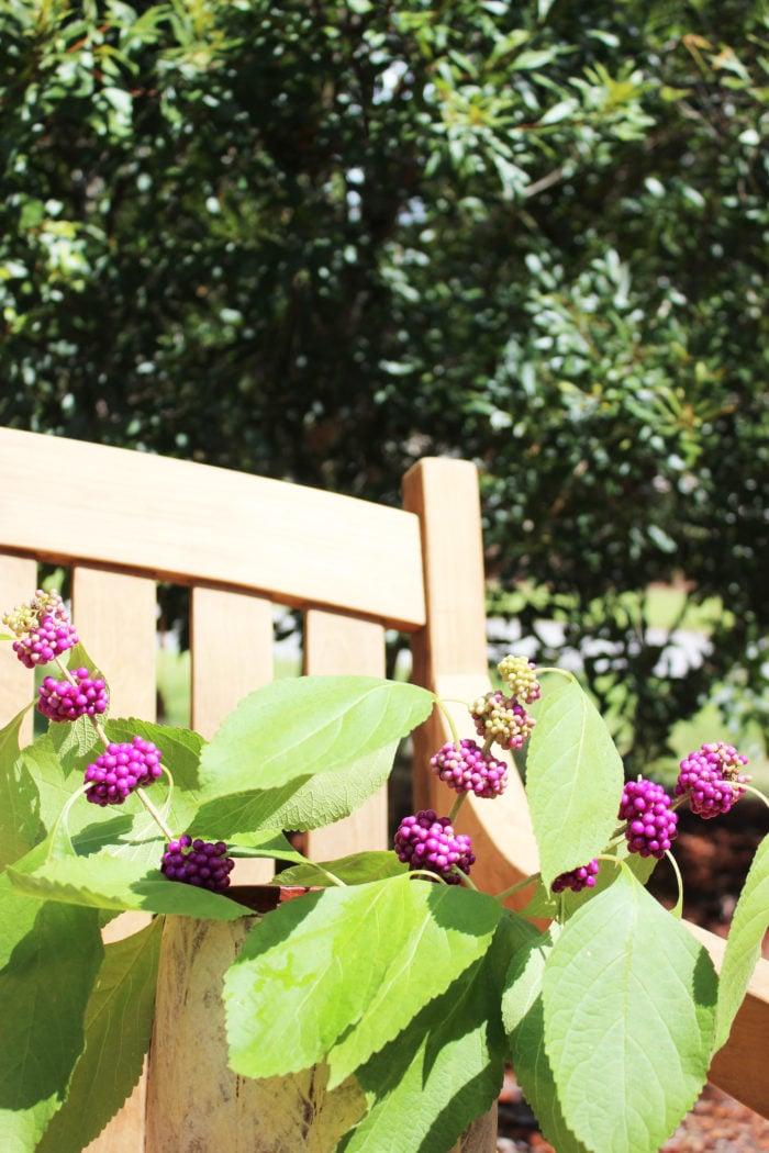 teak bench 4