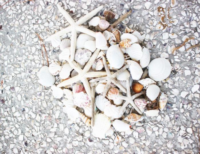 Coastal Shells for wreath