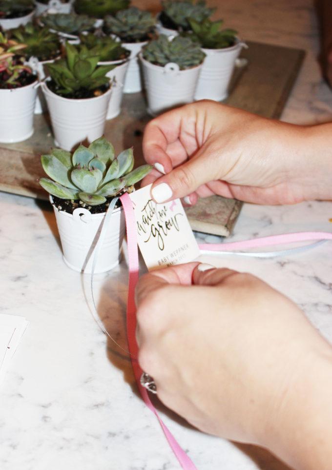 baby-plants-4