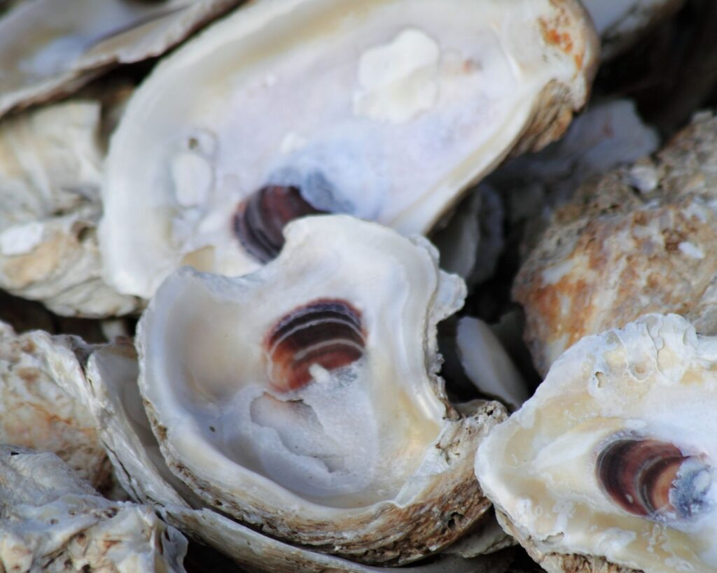oyster shells:How To Make A Oyster Shell Garland Centerpiece