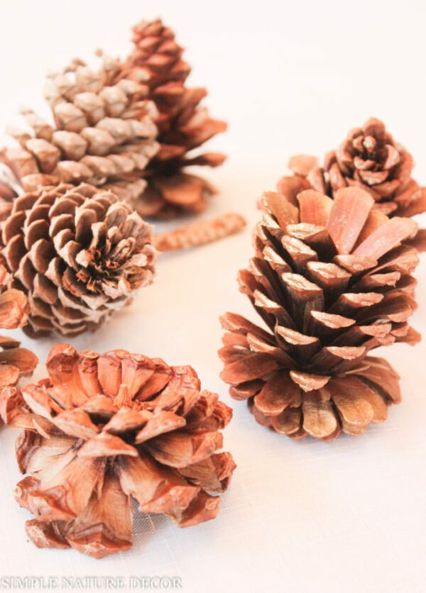 cute pinecones with clipper in half