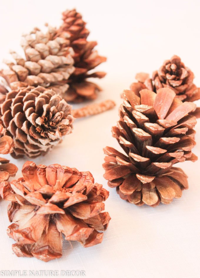 There Are So Many Different Kinds Of Pine Cone. If You Love Pinecones As  Much As I Do Then You Will Love To Make These Easy Pine Cone Table  Decorations.