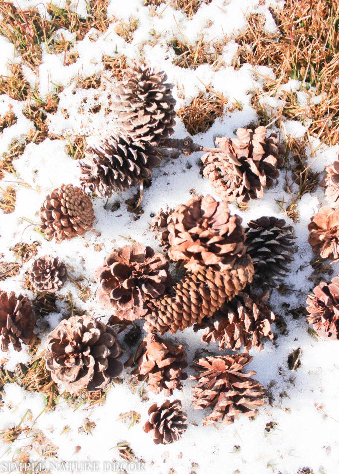 Random Pinecones DIY