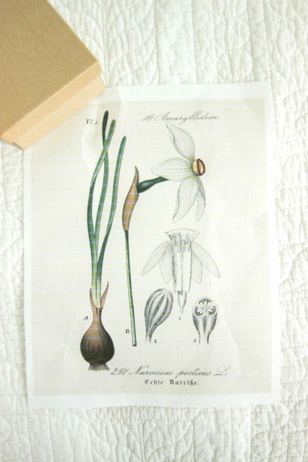 Iris printable for gift wrapping:Botanical Printables