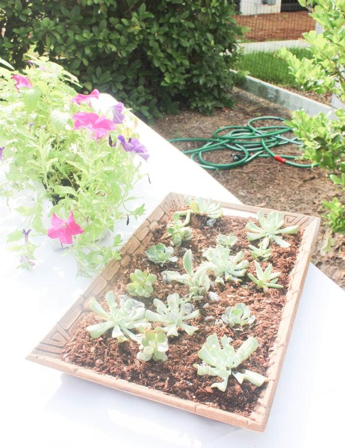 How To Create A Succulent Garden Centerpiece