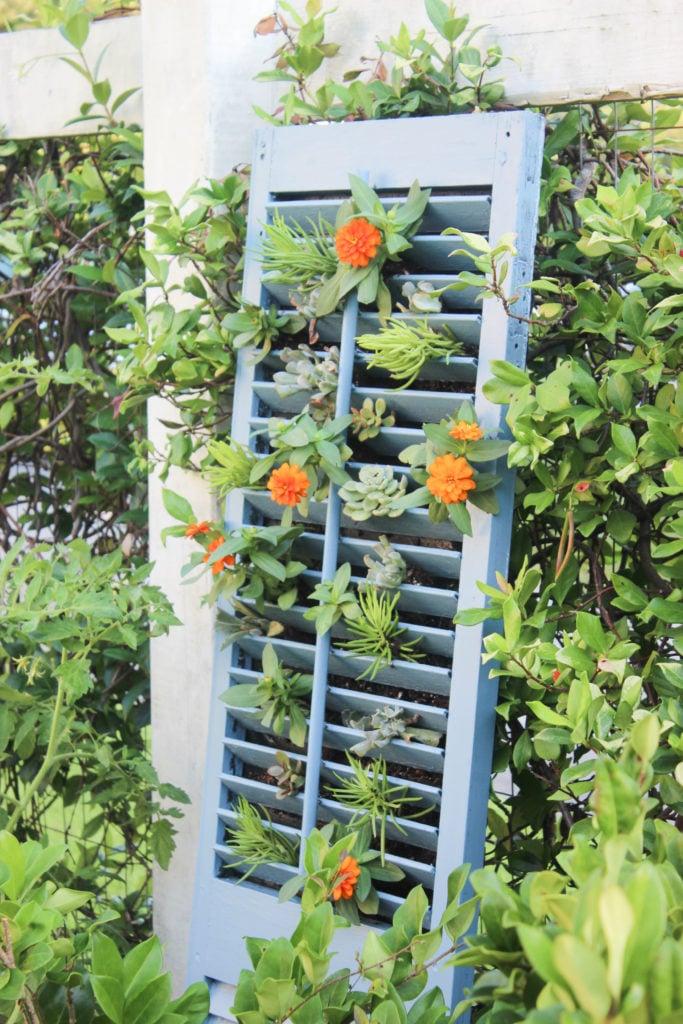 Shutter succulent:15 SHUTTER IDEAS YOU WILL LOVE