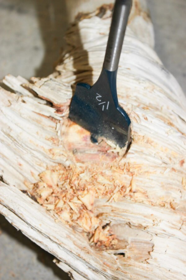 drilling a hole in drftwood on How To Make Natural DIY bleached Driftwood Candle Holder.