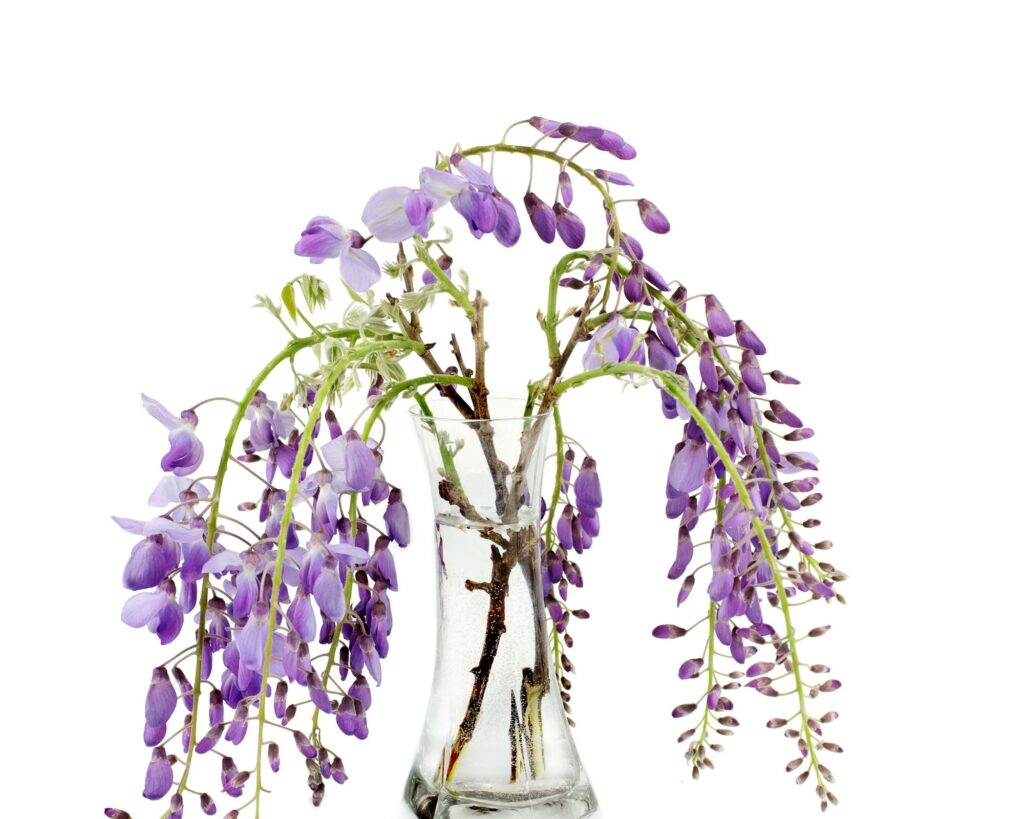 Wisteria:decorating ideas with tree branches